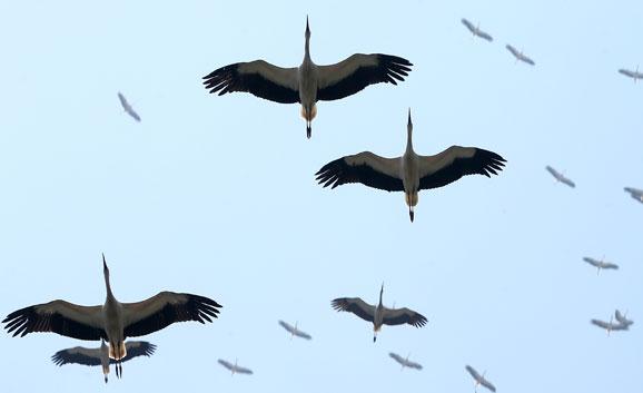 Minik Kuş Gözlemcileri Aranıyor!